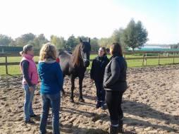 Paardenopstelling