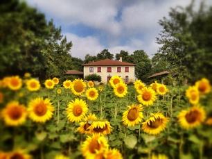 Huis+zonbloem2